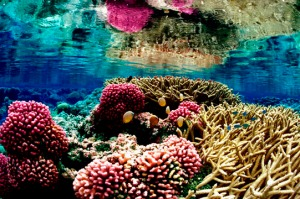 Are we willing to give up fossil fuels to ensure live coral?